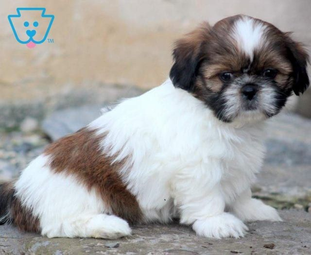 Puppy Finder Find Buy A Dog Today By Using Our Petfinder Puppy Finder Buy A Dog Puppies Funny
