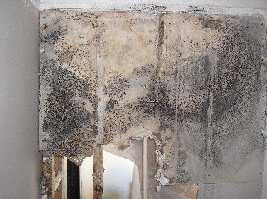 54 best Black Mold images on Pinterest | Mold removal, Toxic mold ...