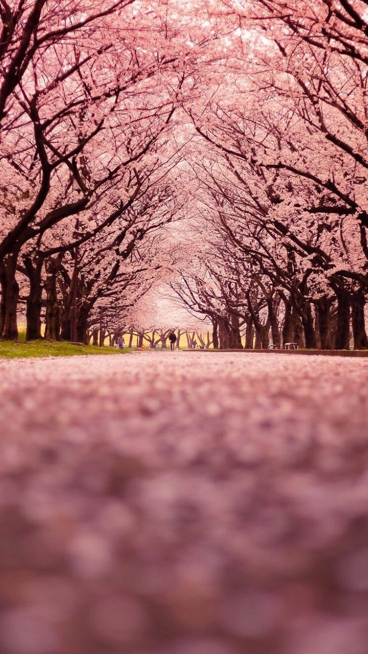 Photo Collection Central Wallpaper Pink