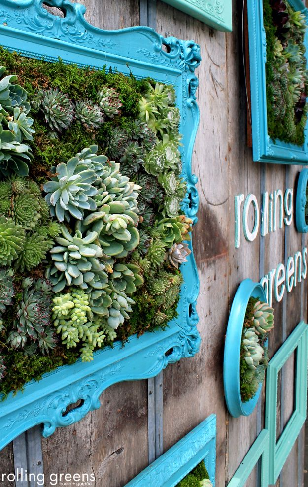 Faux succulents in any picture or mirror frame look beautiful on the walls of a garden shed or around the backyard fence. No watering needed!
