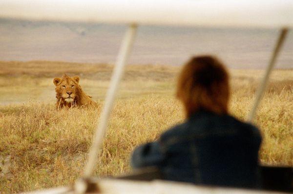 Parc national du Serengeti - Tanzanie