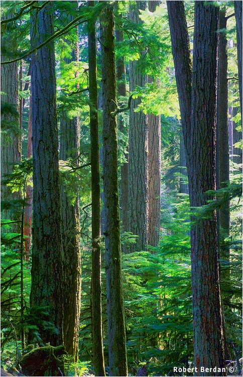 Cathedral Grove, Vancouver Island, BC