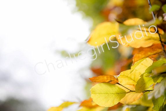Autumn Leaves / Winter / Bundle / Styled by charlenemphotography