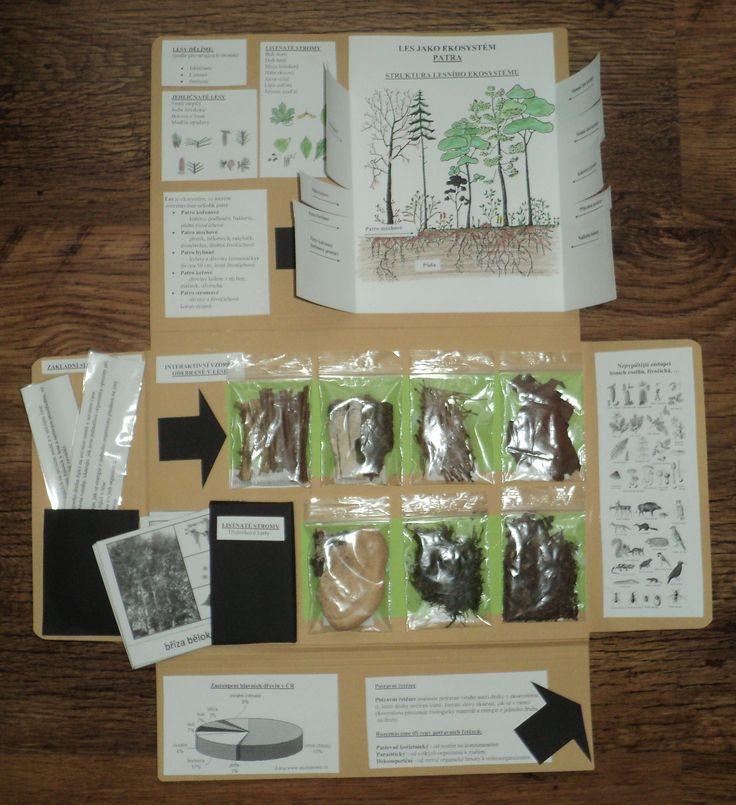 Les jako ekosystém - lapbook Pája