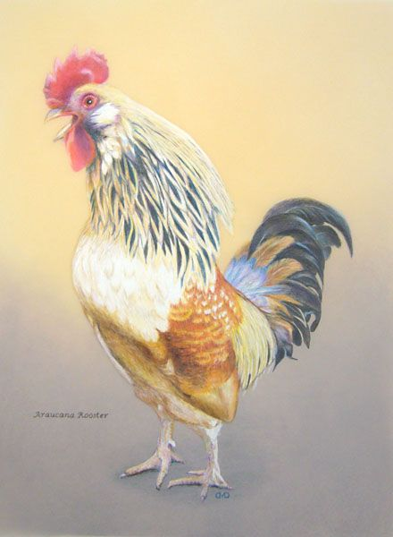 "rooster and chickens painting books | Caption: A portrait of ""James"", a friendly, Ameraucana rooster, by our ..."