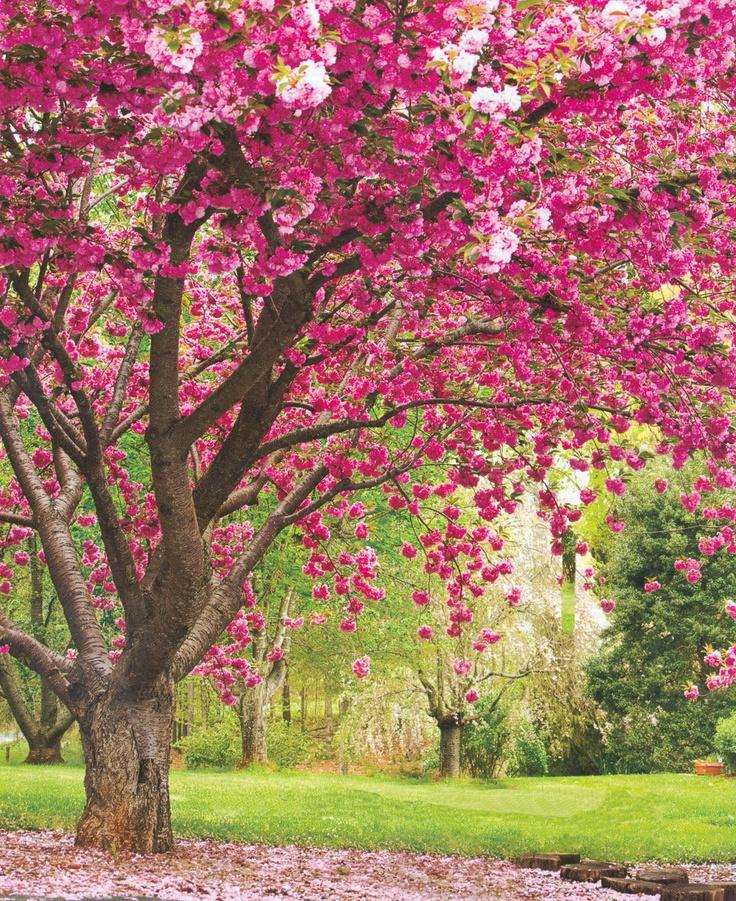 pink spring trees wallpaper - photo #22
