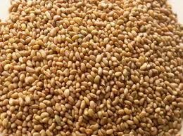 1# Pound of Alfalfa Seed From the Dirty Gardener by The Dirty Gardener. $7.98. Many great uses for these seeds.. Easy to grow. Fast Shipping and handling. One full pound of pure Alfalfa seeds.. Alfalfa is popular for sprouting, wildlife food plots and for feeding livestock and pets.  Alfalfa (pronounced /æl?fælf?/) (Medicago sativa) is a flowering plant in the pea family Fabaceae cultivated as an important forage crop in the US, Canada, Argentina, France, Australia, the Mid...
