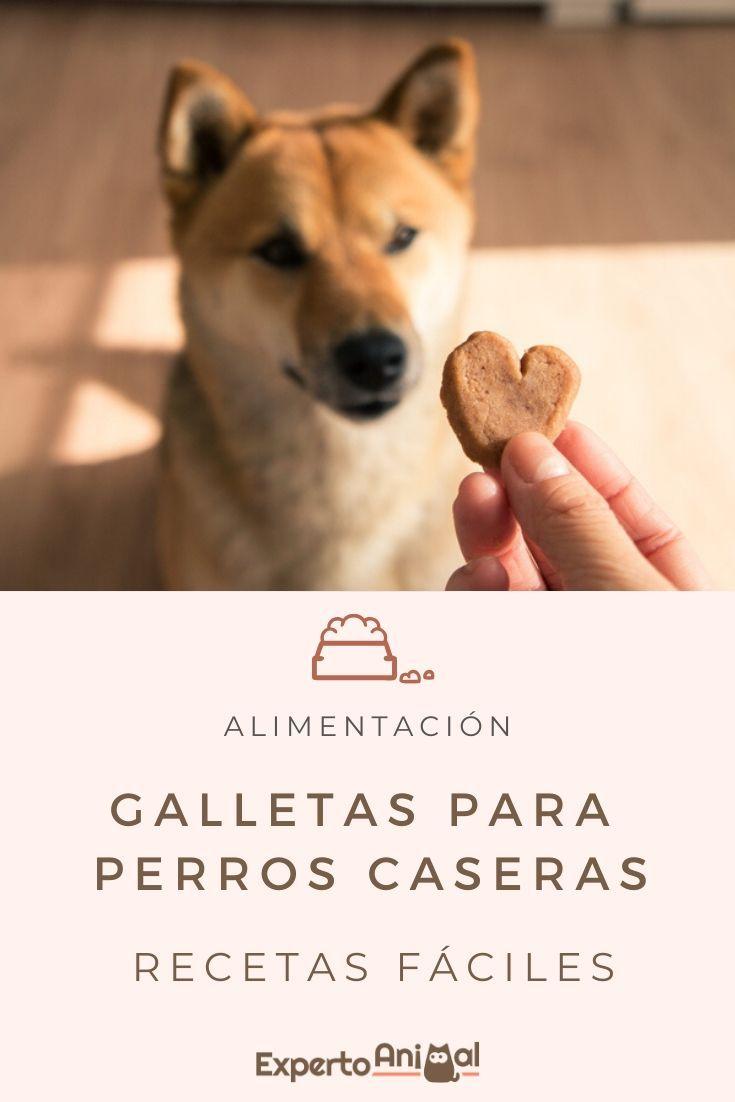 Happy Animals, Animals And Pets, Cute Animals, Homemade Dog Treats, Pet Treats, Diy Food Gifts, Dog Heaven, Christmas Food Gifts, Dog Cookies