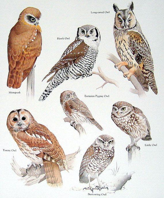 Hawk Owl Tawny Owl Little Owl Vintage 1984 by mysunshinevintage, $10.00