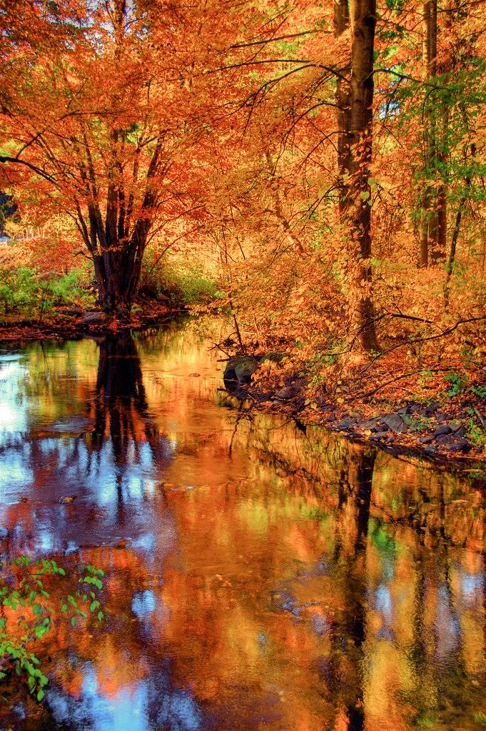 Fall foliage reflected in the West River, Guilford, Connecticut by slack12