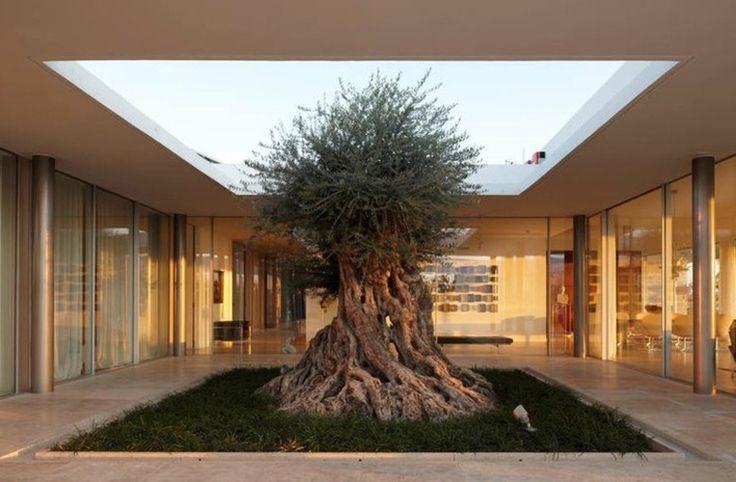 Que tal ter uma árvore na sala? Veja casas que se misturam com o verde - Casa e Decoração - UOL Mulher