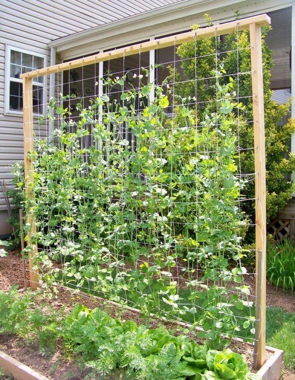 Small Garden Vegetable 25 Beautiful Diy Trellis For Small Garden