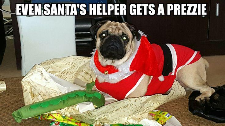 Christmas Bennie 4