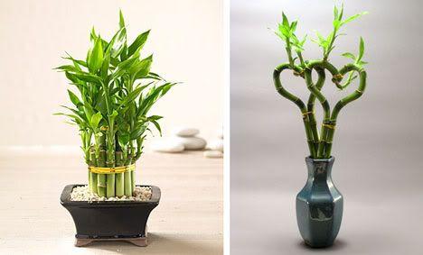 Ideas for Bamboo Centerpiece | Weddings, | Wedding Forums ...