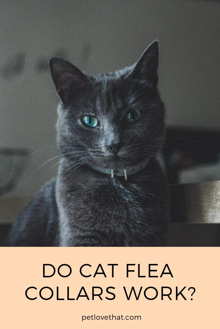 Do Cat Flea Collars Work Cat Fleas Cat Has Fleas Cat Flea Collar
