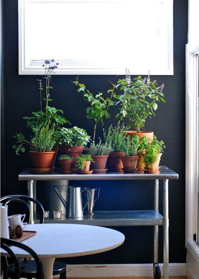 20 Ways to Start an Indoor Herb Garden