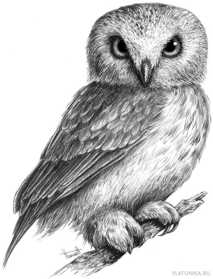 Срисовать картинки карандашом птиц