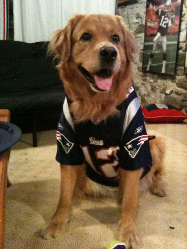 huge selection of 303bc 7a92e new england patriots dog jersey