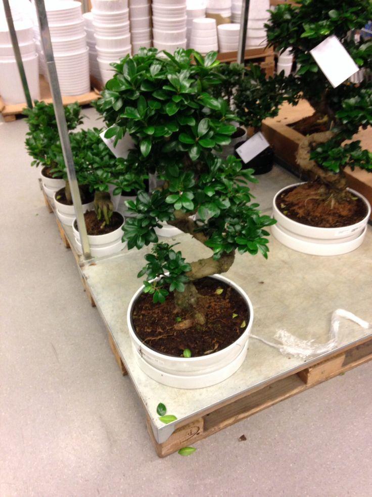 ikea bonsai boom inrichting pinterest ikea and bonsai. Black Bedroom Furniture Sets. Home Design Ideas