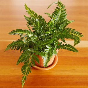 how to make potting mix for ferns