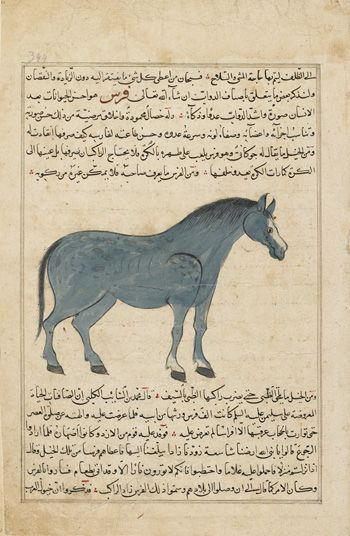Arts of the Islamic World | Folio from Aja'ib al-makhluqat (Wonders of Creation) by al-Qazvini; recto: Horse (Faras); verso: text | F1954.84