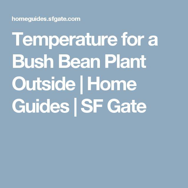 Temperature for a Bush Bean Plant Outside | Home Guides | SF Gate