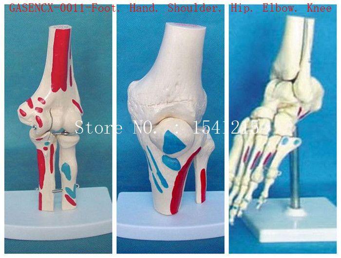 Foot. Hand. Shoulder. Hip. Elbow. Knee Altogether total are 6 partes of human joints Bones Skeleton Medical model-GASENCX-0011