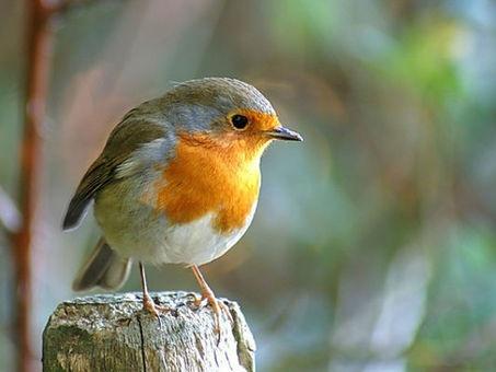 Un week-end d'observation des oiseaux dans les jardins de France