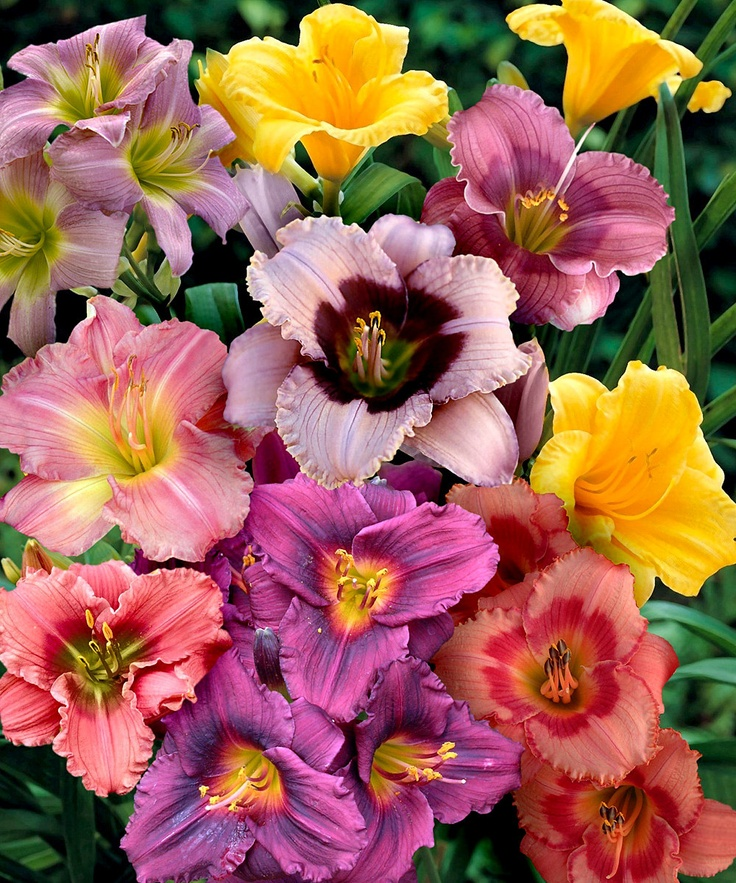 14 best cottage farms flowers images on pinterest blossoms farms rh pinterest com cottage farms plant food cottage farms planting zone