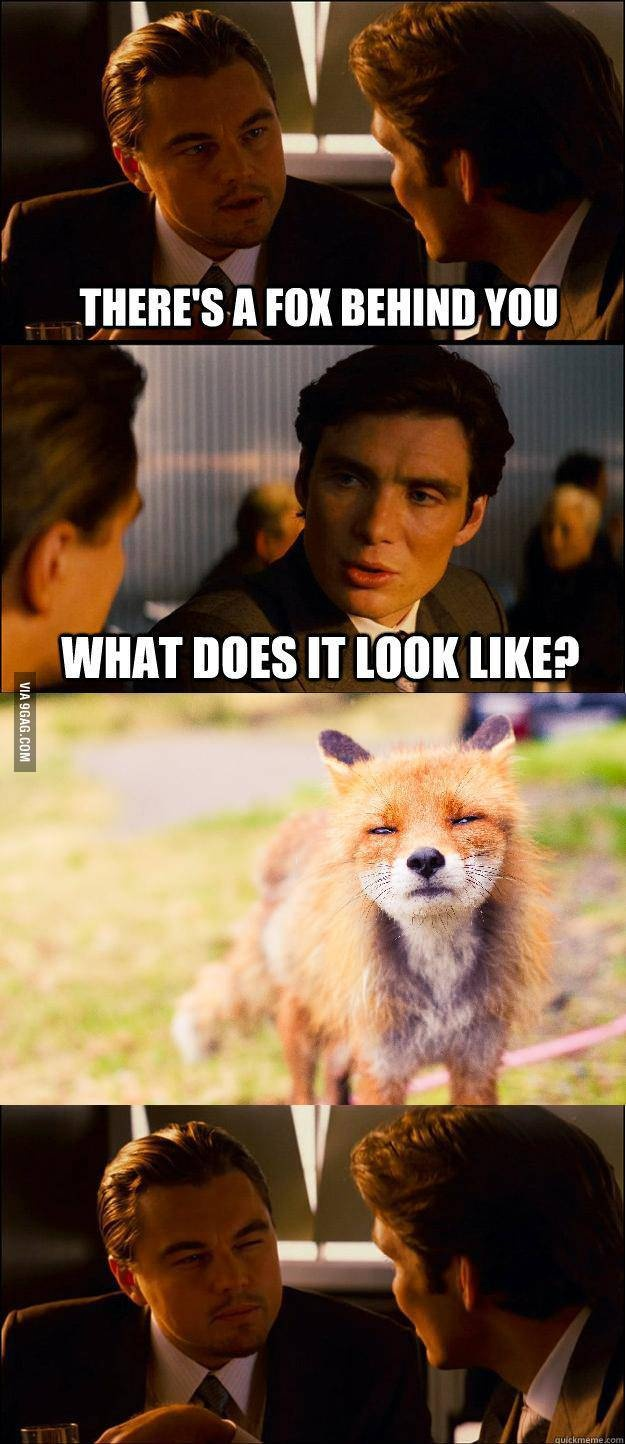 There's a fox