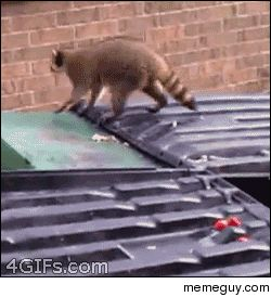 Makes me laugh every time Gif