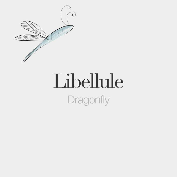 Libellule (weibliches Wort) Libelle /li.be.lyl/ Zeichnung: T