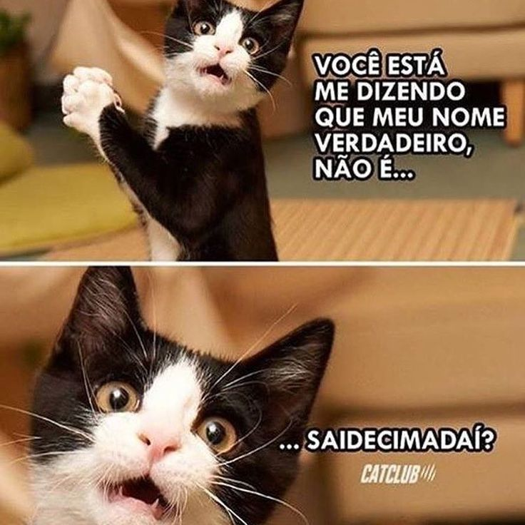 #petmeupet #sabado #gato #gatos #gatofolgado #amogatos #maedegatos #paidegatos #filhode4patas