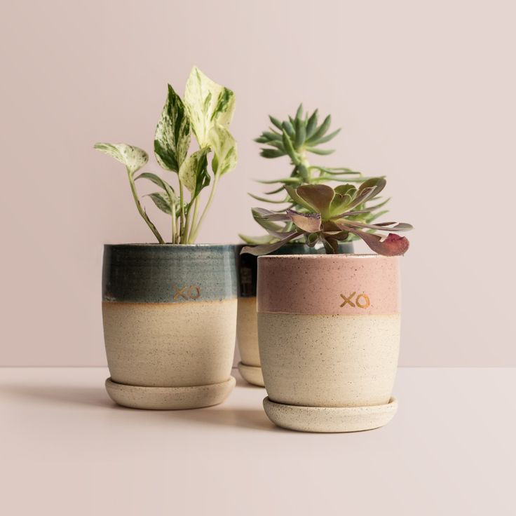 Looking for the perfect Valentine's Day gift for all your loved ones? These gorgeous 'XO' planters are made in Melbourne, handcrafted in Arcadia Scott's home studio. ❌ ⭕️