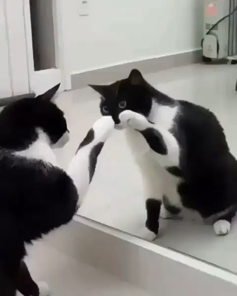 #catvideos #catsvideo #catsvideos