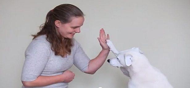 Quem diria que um cãozinho tão especial e angustiado se tornaria personagem principal de uma linda história? Conheça Horus!