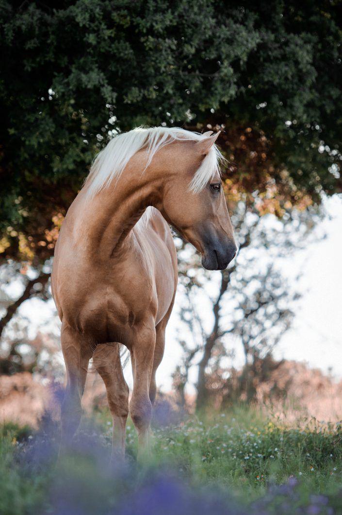 Fotos Pferde In Der Natur I Anna Ibelshauser In 2020 Pferde