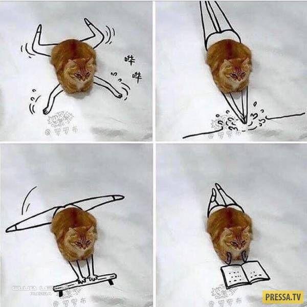 Пошлый юмор Валердоса   Смешные фотографии животных ...