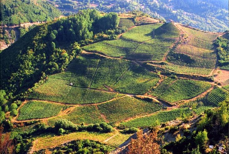 Yiniets vineyards #Metsovo #Greece