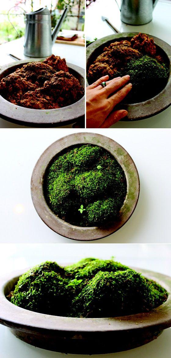 Make Your Own Moss Garden