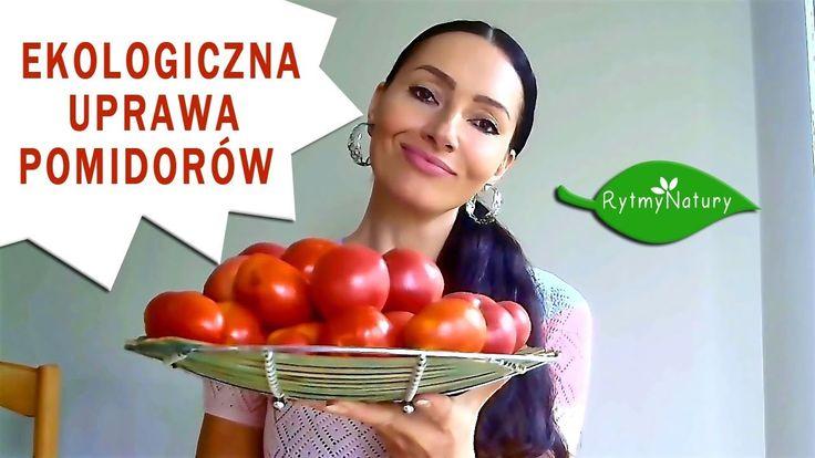 Ekologiczna uprawa pomidorów czyli jak bez oprysków i syntetycznych nawozów cieszyć się obfitymi i zdrowymi zbiorami pomidorów /video/  #pomidory #tomato #eko #organic #zdroweodżywianie #healthyfood #ogród