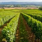 Nyetimber's recent initiatives reflect a growing trend amongst English wine producers to be taken as seriously as their French counterparts. (Jan 2014)
