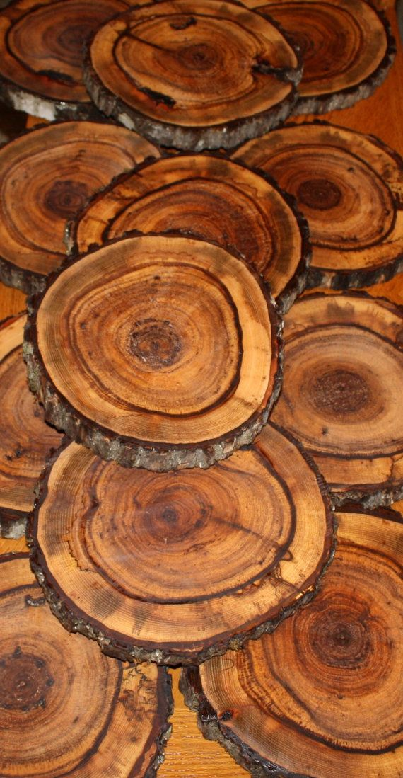 wood slices. Going to mount ceramic fish one each one