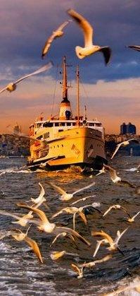 Sea gulls and ship