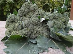 When and How To Harvest Broccoli and Cauliflower: this is such a great resource and easily explained.