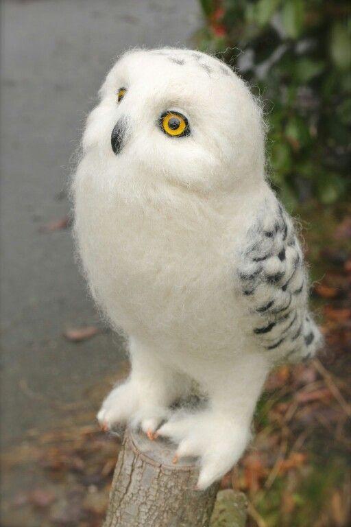 It's a fluffy little Hedwig!
