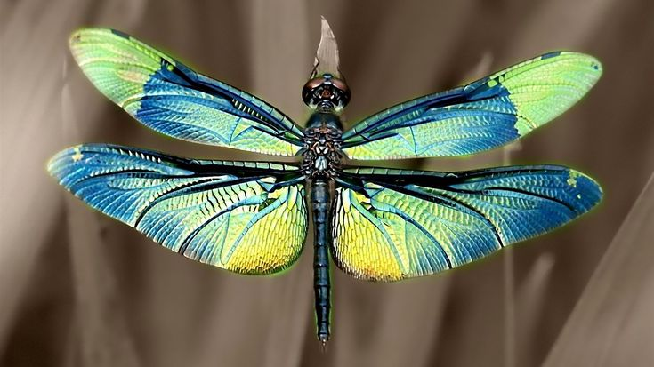 Libélula é um insecto alado pertencente à subordem Anisoptera. Como características distintivas contam-se o corpo fusiforme, com o abdómen muito alongado, olhos compostos e dois pares de asas semitransparentes. Wikipédia