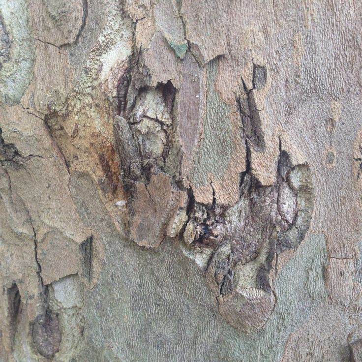 La corteccia del mio albero preferito