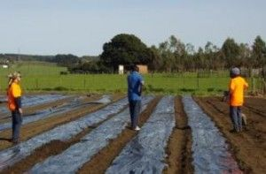 Case study: Ron's opportunity had occurred when his family secured an extended lease on their Yorke Peninsula property. Despite warnings from horticultural specialists that nothing would grow on the arid coastal property, the family established a native foods market garden, Bookyana Enterprises.  http://www.iba.gov.au/about-us/news-publications/good-news-stories/business-ownership/cultivating-success/