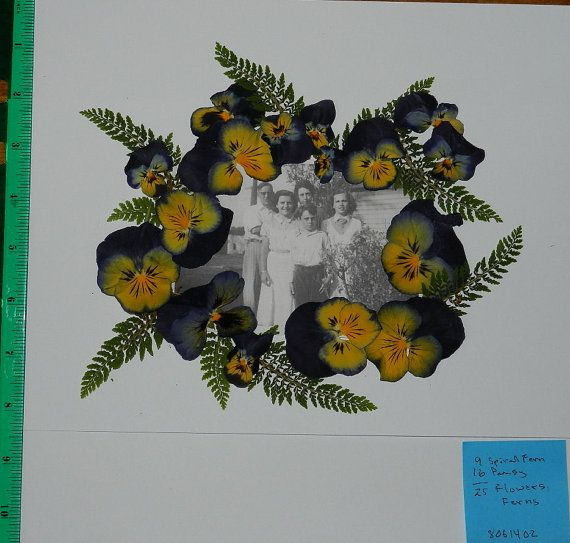 Fun Things you can do with these pretty flowers and ferns.  Frame a picture.  A fantastic special gift. Real Pressed Dried Flowers 25 Pansy/Viola with by TickiesTreasures, $4.99